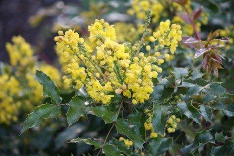 Profitez des fleurs d'hiver