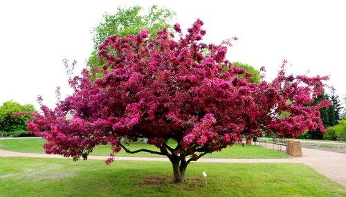 Tout savoir sur les fleurs de printemps