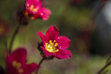 Tout savoir sur les fleurs du printemps