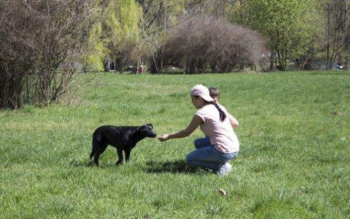 Nourriture pour chien : infos & conseils