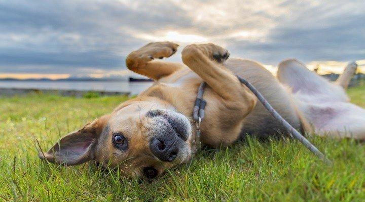 Parasites du chien : traitements naturels pour tiques, poux et acariens