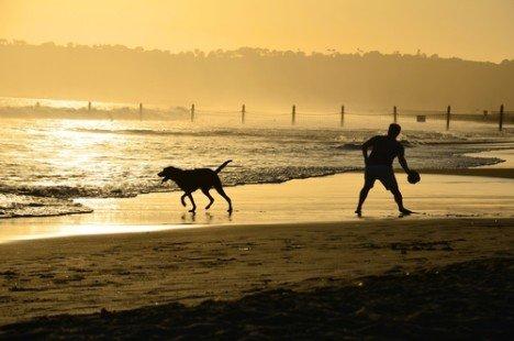 Plages autorisées aux chiens : toutes les informations
