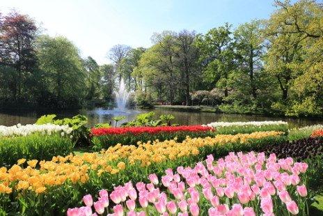 Keukenhof et ses champs de tulipes