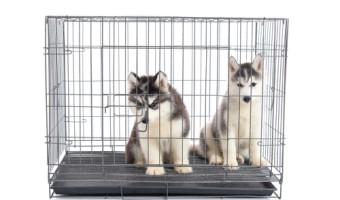 Cage de transport pour chiens : notre guide pour l'achat