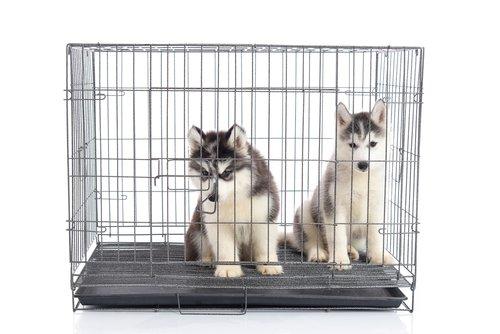 Photo of Cage de transport pour chiens : notre guide pour l'achat
