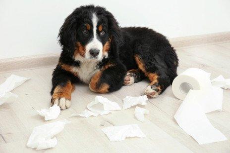 Que nous dit le comportement du chien ?