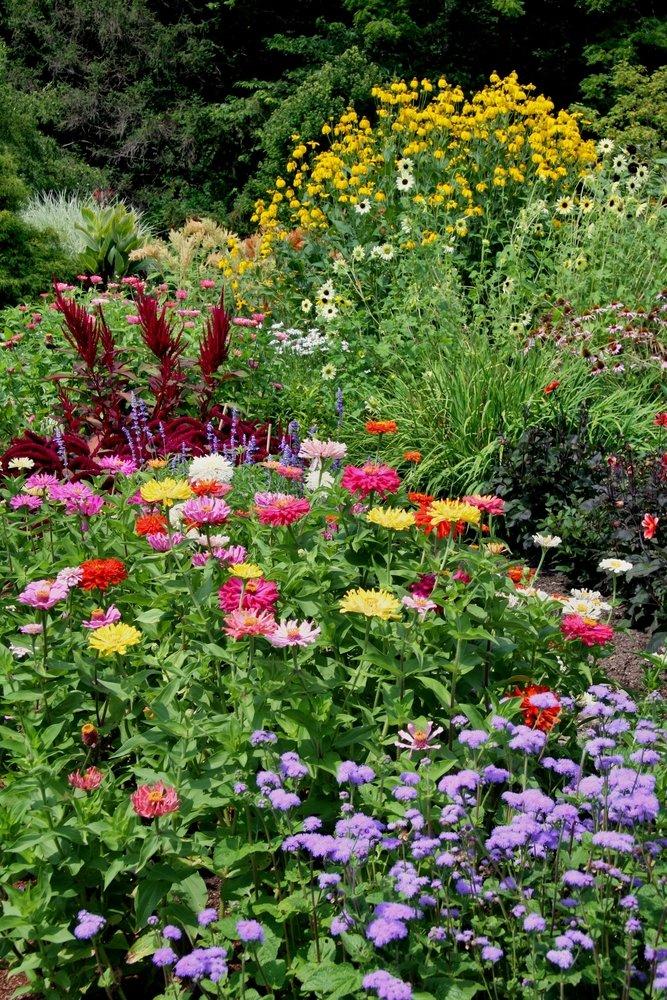 Photo of Comment choisir et entretenir les fleurs d'été ?
