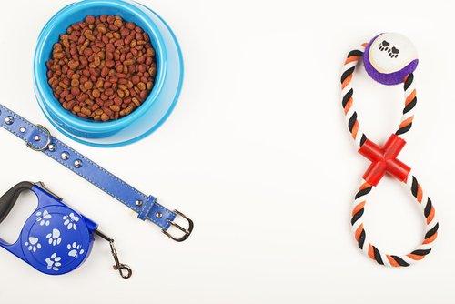 Accessoires pour chiens : lesquels choisir ?