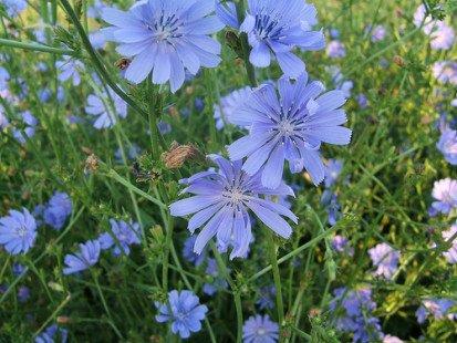 Une fleur estivale