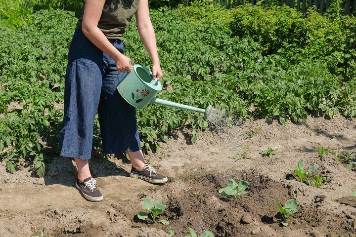 Photo of Cet art de vivre qu'est le jardinage