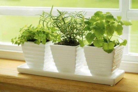 La culture intérieure des plantes aromatiques