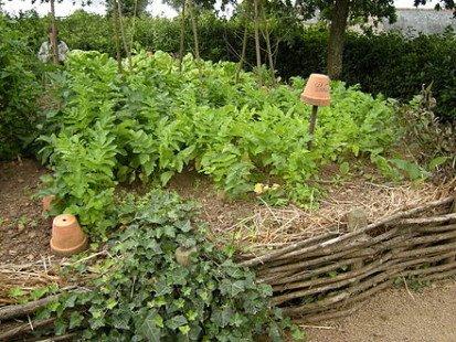 Cultiver son jardin et ses légumes