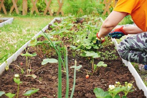 Découvrez les plantes potagères