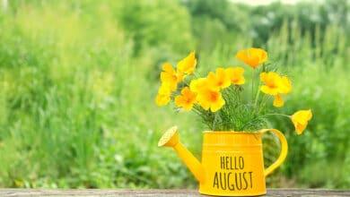 """Arrosaoir jaune """"Hello August"""" avec des pavots de californie jaune posé sur une planche en bois et en arrière plan un jardin"""