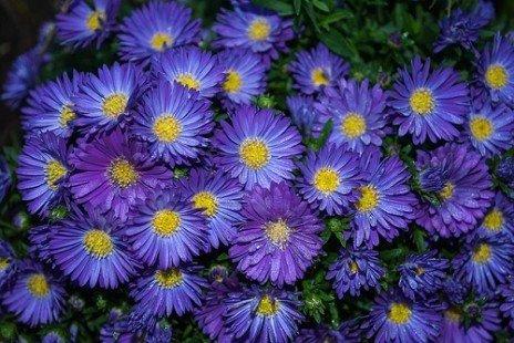Les variétés de plantes vivaces