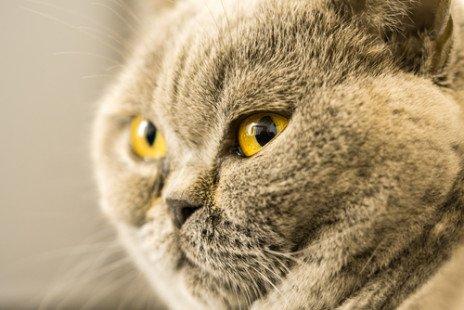 Un chat tout en rondeurs