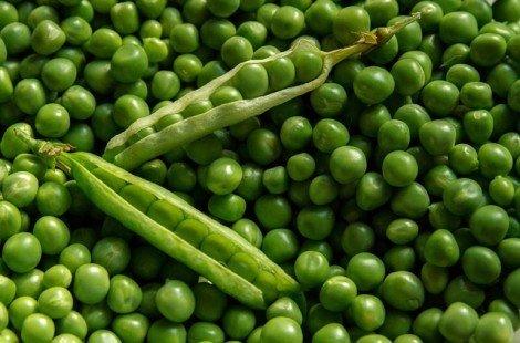 Petits pois : légume ou féculent ?