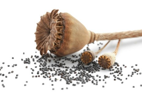 Les graines du coquelicot