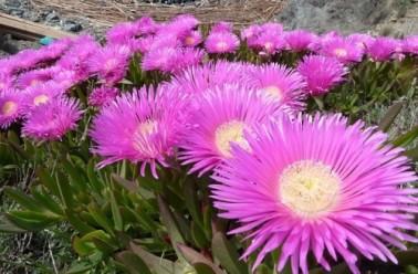 Plantes grasses d finition esp ces repr sentatives et for Plante grasses exterieur