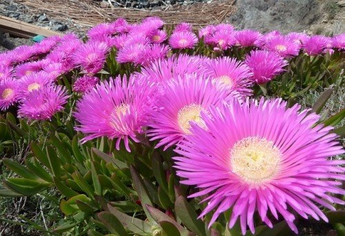 Photo of Les plantes grasses ou comment apporter une touche artistique à son jardin ?