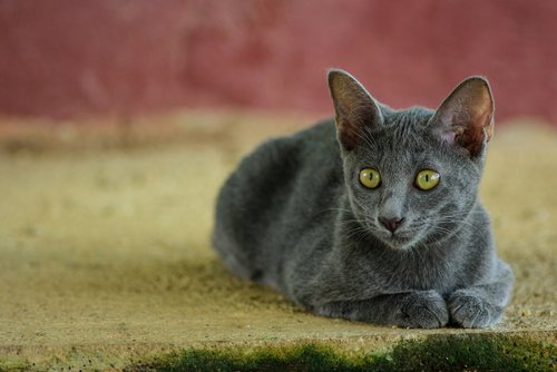 Photo of Le Korat ? Mon petit air thaï