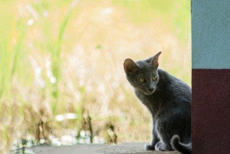 Ce chat qui porte bonheur !