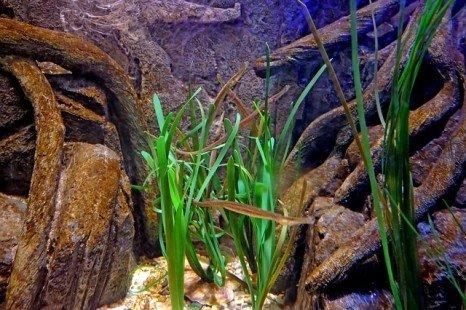 Plantes aquatiques : idéales pour décorer un aquarium