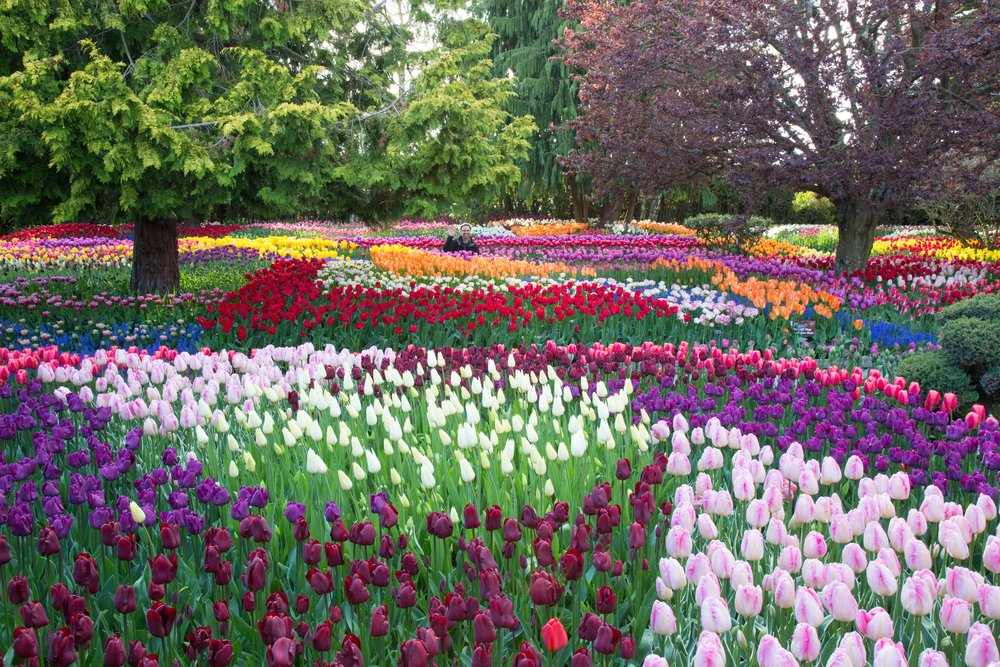 Photo of Les jardins du Keukenhof à Lisse