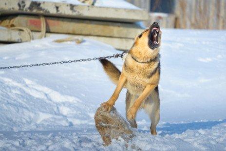 Comment choisir son chien de garde ?
