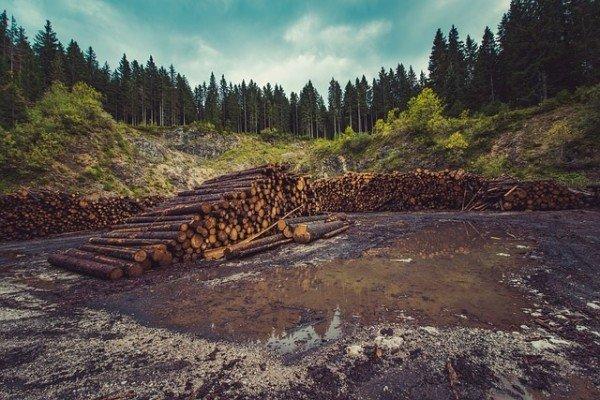 Les dangers de la déforestation