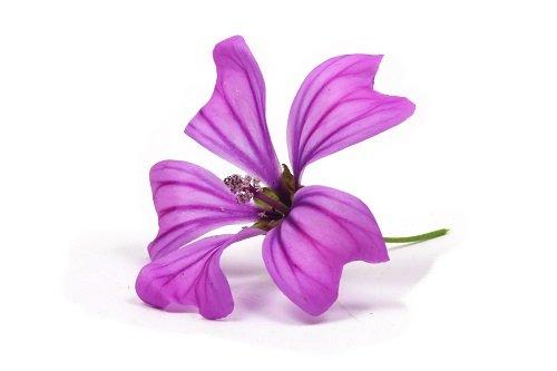 L'élégante fleur de mauve