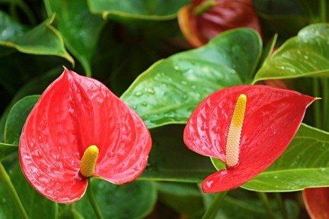 L'entretien des plantes d'intérieur
