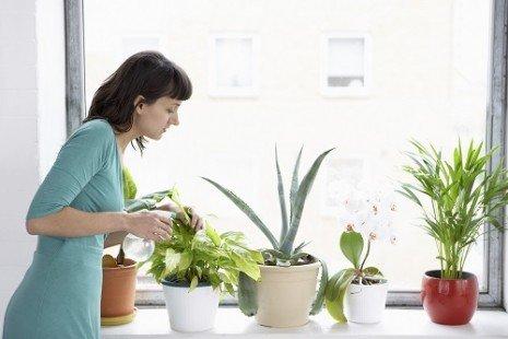 plantes intérieur3