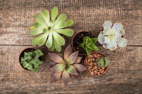 plantes intérieur4