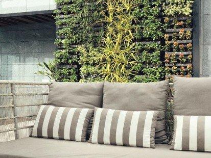 plantes intérieur5