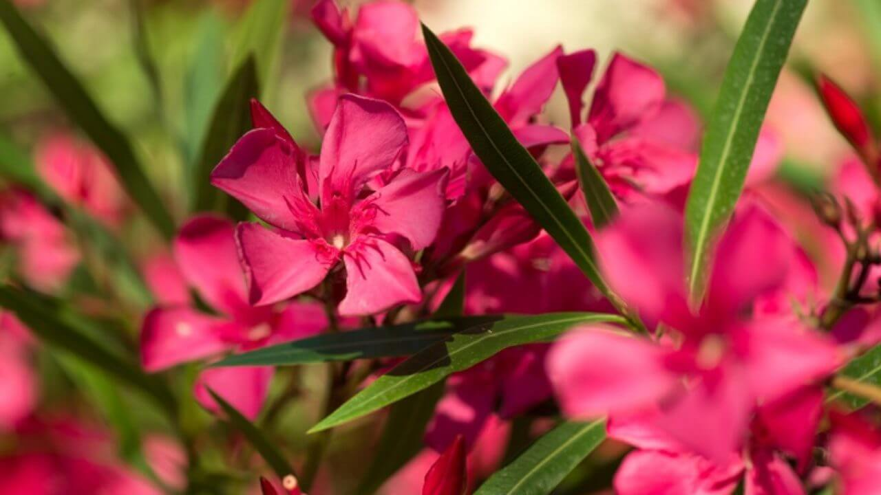 Plante Méditerranéenne Sans Arrosage plantes méditerranéennes : espèces représentatives et entretien