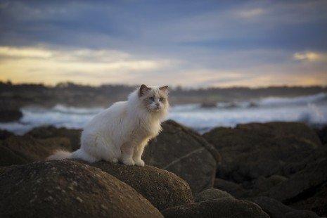 Un chat sur des rochers