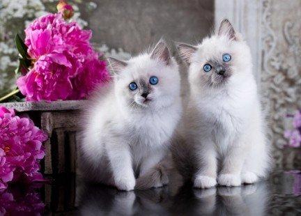 Deux adorables chatons