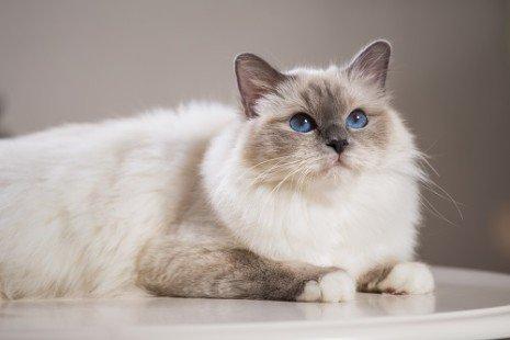 Un chat élégant et plein de classe