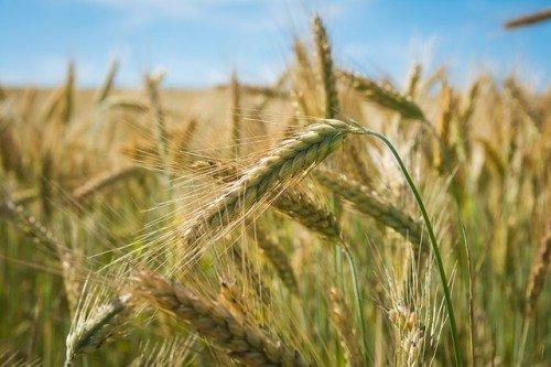 Photo of Le son de blé : un aliment qui mérite d'être connu !