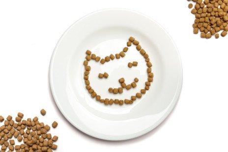 Alimentation du chat : comment bien prendre soin de lui ?