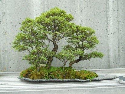Conseils pour créer de magnifiques bonsaïs