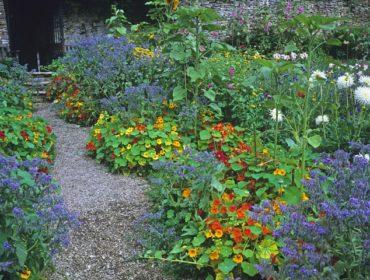 La Capucine à Faire Fleurir Au Jardin Ou Sur Un Balcon Toutvert