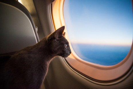 Mon chat en vacances : que faire ?