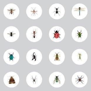 Insectes nuisibles : comment les chasser écologiquement