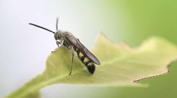 Les insectes nuisibles et la lutte écologique