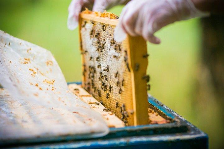 ruche conseils et astuces pour installer une ruche chez soi. Black Bedroom Furniture Sets. Home Design Ideas