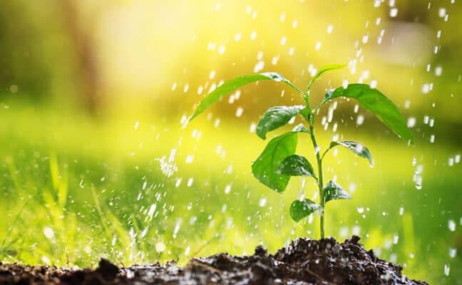 jeune pousse dans la terre, arrosée en pluie