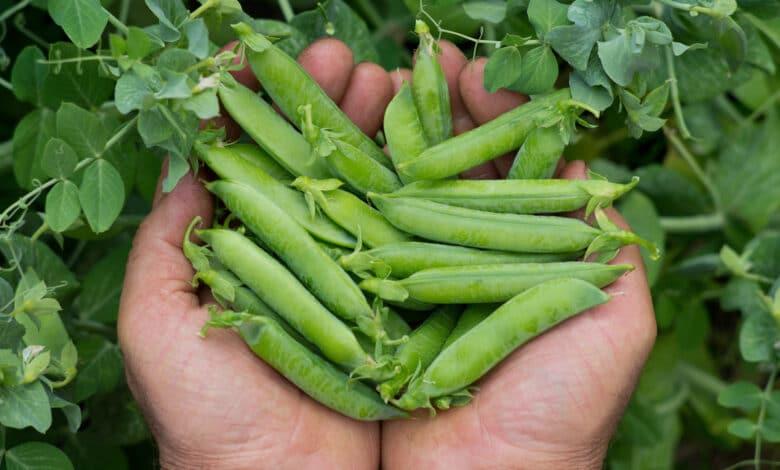 Que faire pousser en mai dans votre potager
