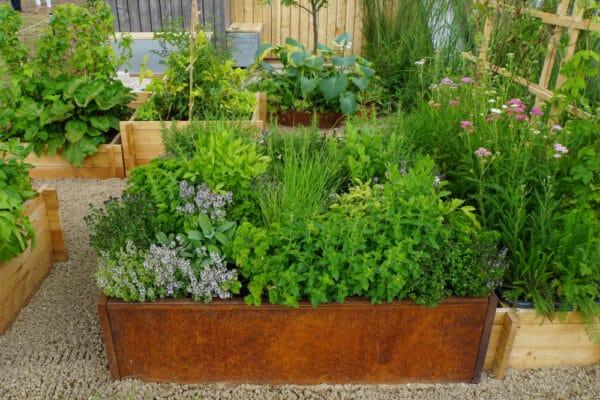 Que faire pousser en avril dans votre potager ? Jardin potager cultivé en carré